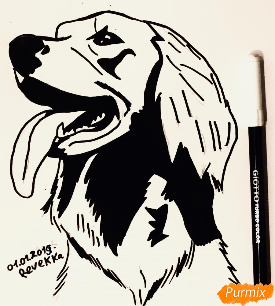 Рисуем собаку породы Сеттер в стиле тату - фото 7
