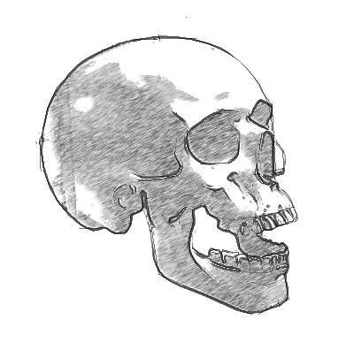 Рисуем череп человека - шаг 5
