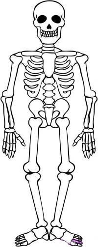 скелета на хэллоуин карандашом