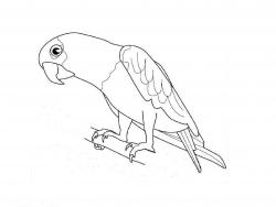 Как легко нарисовать попугая видео
