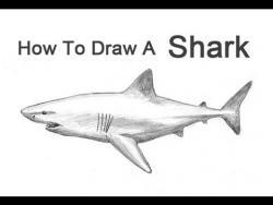 Как просто нарисовать акулу карандашом