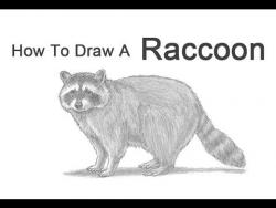 Как нарисовать Енота карандашом видео урок
