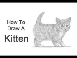 Как нарисовать маленького котенка карандашом видео урок