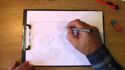 Как нарисовать полевые цветы карандашом видео урок