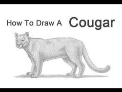 Как нарисовать пуму на бумаге карандашом видео урок
