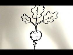 Как нарисовать редис ребенку видео урок