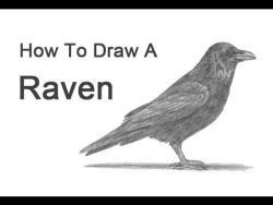 Как нарисовать ворона на бумаге карандашом видео урок