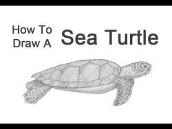 Как нарисовать зелёную морскую черепаху видео урок