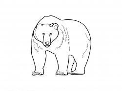 Как просто нарисовать медведя карандашом видео