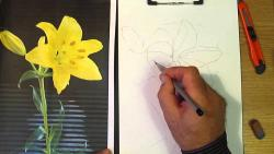 Подробный видео урок как нарисовать лилию карандашом