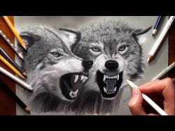 Как нарисовать двух волков видео