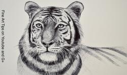 Фото голову тигра маркером