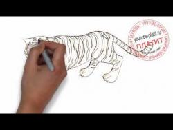 Как легко нарисовать тигра видео