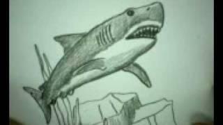 Фото белую акулу карандашом  урок