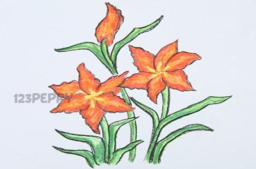 Как нарисовать цветок Амариллис карандашом видеоурок
