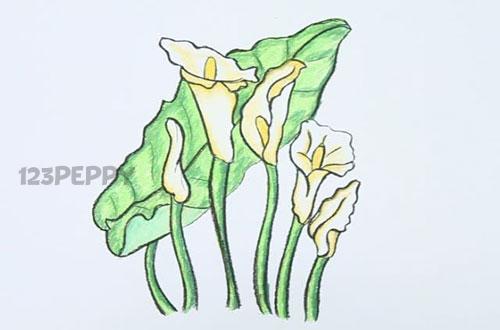 Как нарисовать цветок Арум карандашом видеоурок
