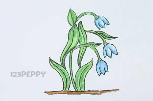 Как нарисовать цветок Крокус карандашом видеоурок