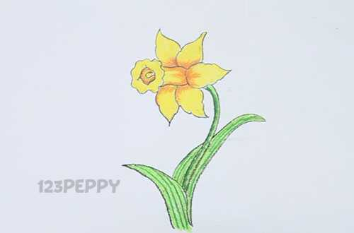Как нарисовать цветок Нарцисс карандашом видеоурок