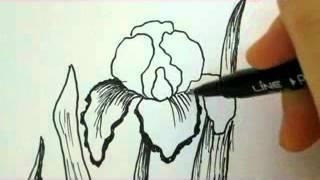 Как нарисовать ирис карандашом видео урок