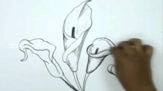 Как нарисовать каллы карандашом видео урок