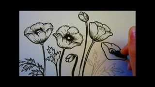 Как рисовать маки карандашом видео урок