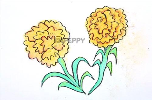 Как нарисовать цветы Ноготки карандашом видеоурок
