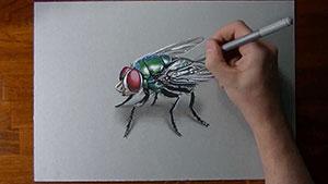 Как нарисовать реалистичную 3D муху на бумаге видео урок