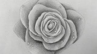 Как нарисовать розу  видео урок