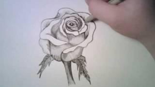 Как нарисовать розу карандашом видео урок