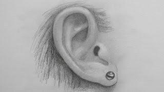Как нарисовать реалистичное ухо  видео урок