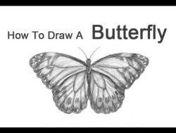 Бабочку карандашом шаг за шагом видео