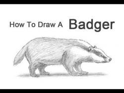 Видео урок: как нарисовать Барсука простым карандашом