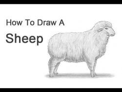 Видео урок: как нарисовать домашнюю овцу карандашом