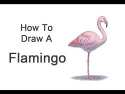 Видео урок: как нарисовать фламинго на бумаге карандашом