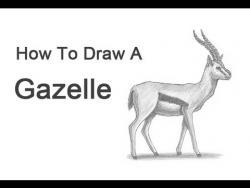 Видео урок: как нарисовать Газель на бумаге карандашом