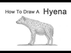 Видео урок: как нарисовать гиену на бумаге карандашом