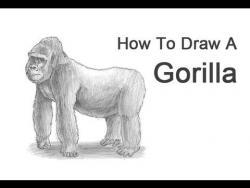 Видео урок: как нарисовать Гориллу карандашом
