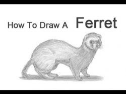 Видео урок: как нарисовать хорька простым карандашом