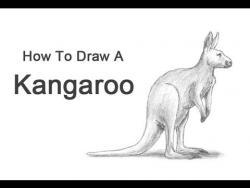 Видео урок: как нарисовать Кенгуру простым карандашом