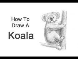Видео урок: как нарисовать Коалу карандашом шаг за шагом