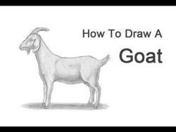 Видео урок: как нарисовать Козу на бумаге карандашом