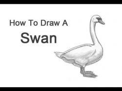 Видео урок: как нарисовать Лебедя карандашом