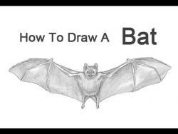 Видео урок: как нарисовать летучую мышь карандашом