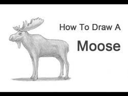 Видео урок: как нарисовать лося карандашом