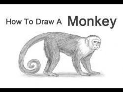 Видео урок: как нарисовать Обезьяну простым карандашом