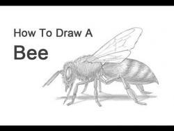Видео урок: как нарисовать Пчёлу карандашом