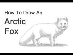 Видео урок: как нарисовать песца простым карандашом