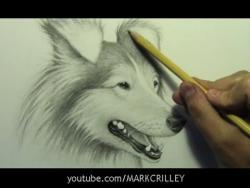 Видео урок как нарисовать реалистичную голову собаки карандашом