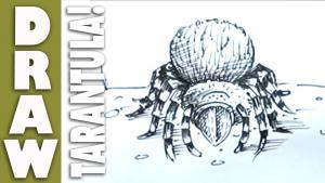 Видео урок как нарисовать Тарантула карандашом