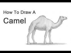 Видео урок: как нарисовать верблюда на бумаге карандашом
